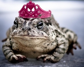 frog, prince charming, true love, princess, the princess and the frog, someday my prince will come